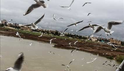 Karun River home to fish-eating birds