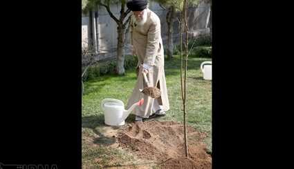 Leader plants sapling to mark Natl. Arbor Day