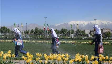 Spring of tulips in Tehran