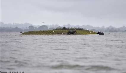 India / Flood in Casiranga National Park