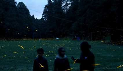 Fireflies light up the night in Mexico