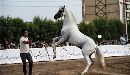 Native horse of Iranian Plateau