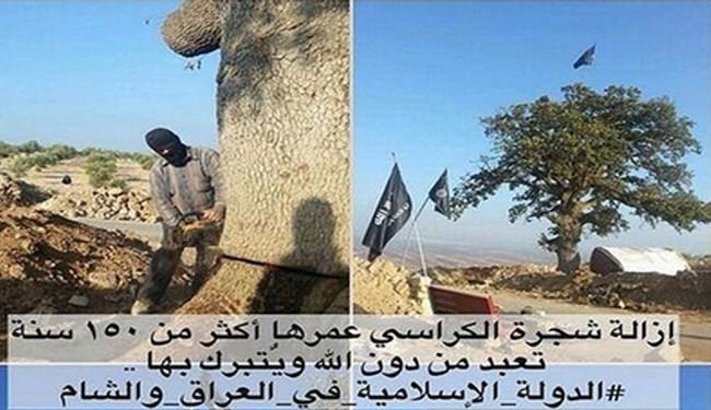 Al-Qaeda militants execute old oak tree for 'being worshipped'
