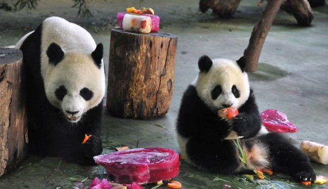 Thousands celebrate birthday of first Taiwan-born panda cub