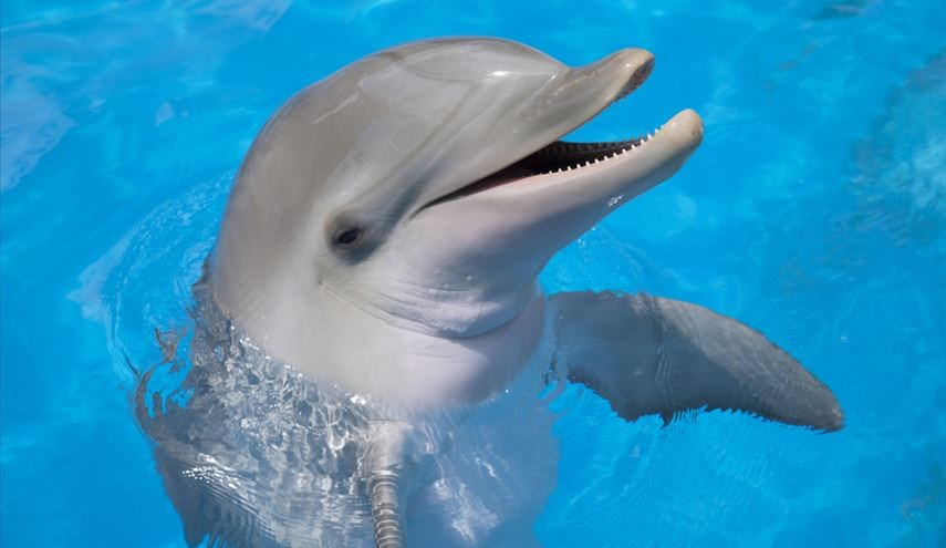 Unbelievable Discovery: Dolphins Can Speak Almost Like Humans