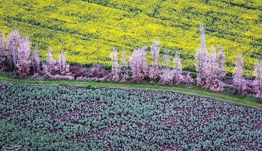 Iran's Beauties in Photos Spring in Gorgan