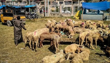 Muslims in Kashmir Preparing to Celebrate Eid Al-Adha