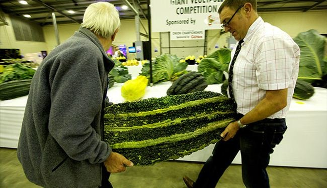 National Vegetable Championships 2013 in UK